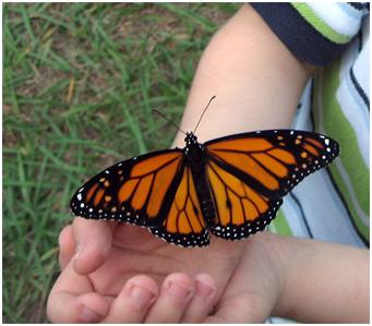A child holding a butterfly in the palm of his hand on what looks like a summer day
